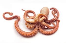 Inktvis Octopus Tentakels