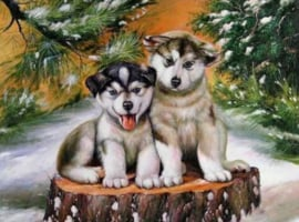 Diamond panting hondjes in sneeuw (50x40cm)(full)