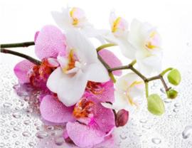 Diamond painting orchidee (50x40cm)(full)