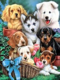 Diamond painting schattige hondjes (40x30cm)(full)(ronde steentjes)