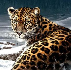 Diamond painting leopard (50x50cm)(full)