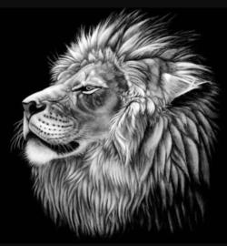 Diamond painting leeuw (20x20cm)(full)