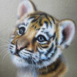 Diamond painting baby tijger (25x25cm)(full)