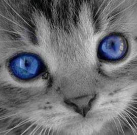 Diamond painting poes met blauwe ogen (20x20cm)(full)