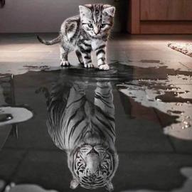 Diamond painting poes naar tijger (50x50cm)(full)