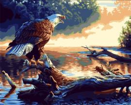 Diamond painting prachtige roofvogel (60x45cm)(full)