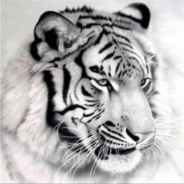 Diamond painting prachtige tijger (50x50cm)(full)