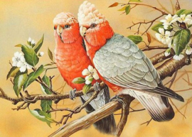 Diamond painting prachtige vogels (50x40cm)(full)