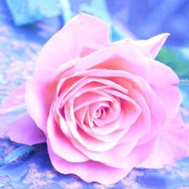 Diamond painting roze roos (25x25cm)