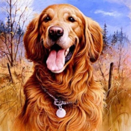Diamond painting prachtige hond (50x50cm)(full)