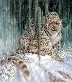 Diamond painting leopards (40x40cm)