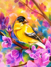 Diamond painting prachtige vogel (60x45cm)(full)