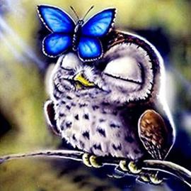 Diamond painting uil met vlinder (20x20cm)