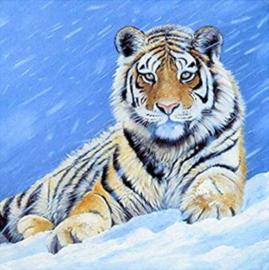 Diamond painting prachtige tijger (60x60cm)(full)