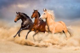 Diamond painting paarden (60x40cm)