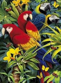 Diamond painting papegaaien (50x40cm)(full)