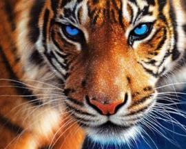 Diamond painting tijger (25x20cm)(full)