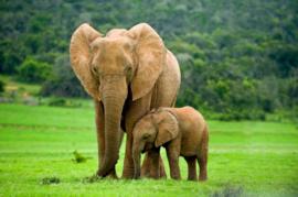 Diamond painting olifanten (50x40cm)(full)