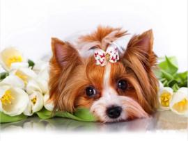 Diamond painting schattig hondje (50x40cm)(full)