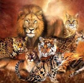 Diamond painting cats (50x50cm)(full)