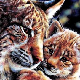 Diamond painting tijger met jong (50x50cm)(full)