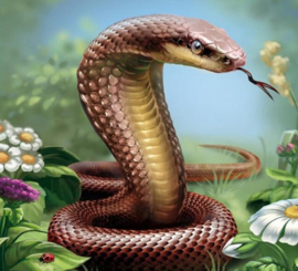 Diamond painting slang cobra (45x45cm)(full)