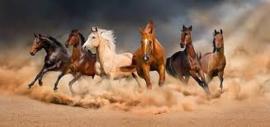 Diamond painting prachtige paarden (100x45cm)(full)