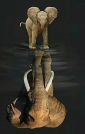 Diamond painting olifantje / olifant (60x45cm)(full)