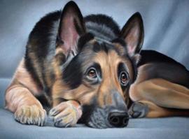 Diamond painting mooie hond (60x40cm)(full)