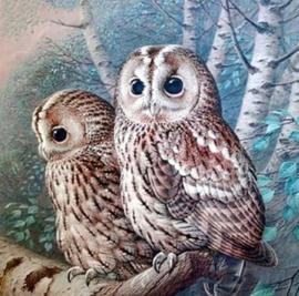 Diamond painting uilen setje (50x50cm)(full)