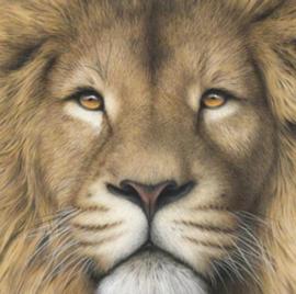 Diamond painting leeuwen kop (20x20cm)(full)