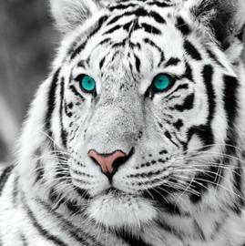 Diamond painting witte tijger (25x25cm)(full)