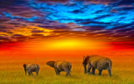 Diamond painting zonsondergang olifantjes (80x60cm)(full)