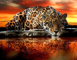 Diamond Painting Panter (60x45cm)(full)