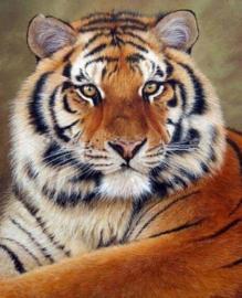 Diamond painting tijger (60x45cm)(full)