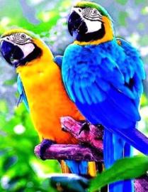 Diamond Painting papegaaien (25x15cm)(full)(ronde steentjes)