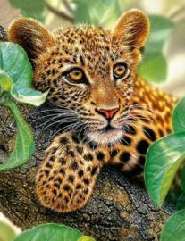 Diamond painting luipaard (50x40cm)(full)