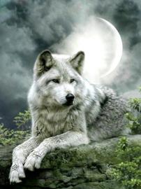 Diamond painting moon wolf (60x45cm)(full)