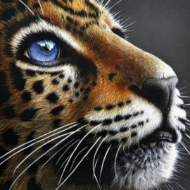 Diamond painting blue eyes (25x25cm)(full)
