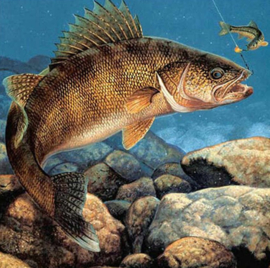 Diamond painting grote vis (50x50cm)