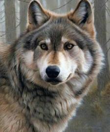 Diamond painting wolf (20x15cm)