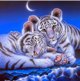 Diamond painting mooie tijgers (50x50cm)(full)