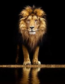Diamond painting prachtige leeuw (50x40cm)(full)