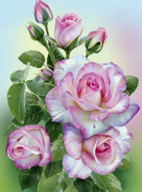 Diamond painting roze rozen (40x30cm)(full)