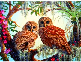 Diamond painting mooie uilen (60x45cm)(full)