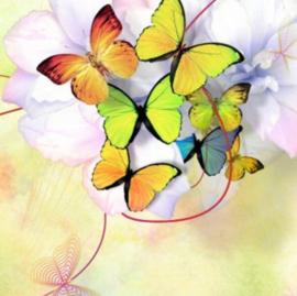 Diamond painting mooie vlinders (40x40cm)(full)