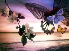 Diamond painting prachtige vlinders (60x45cm)(full)