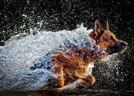 Diamond painting water hond (60x45cm)(full)