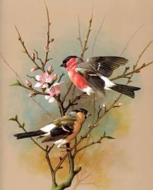 Diamond painting vogeltjes (50x40cm)(full)