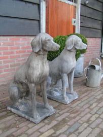 Beeld zittende hond